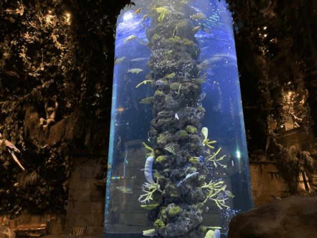 レインフォレストカフェの巨大水槽